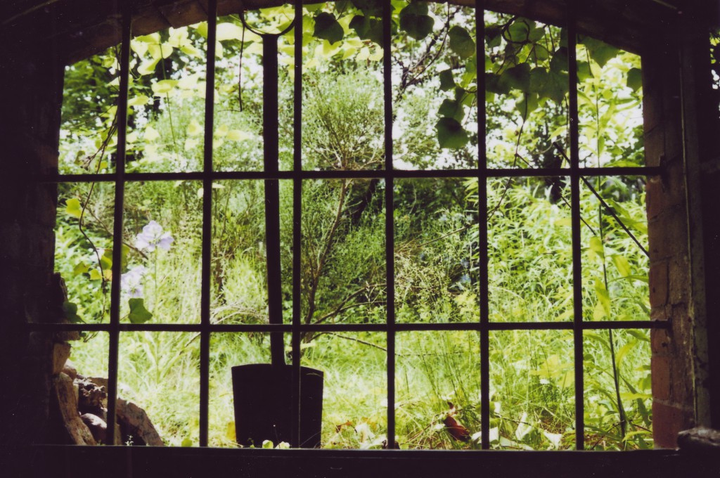 Blick aus einem Kellerfenster in einen sonnigen, grünen Hof. Das Fenster ist vergittert, hinter dem Gitter steht ein Spaten