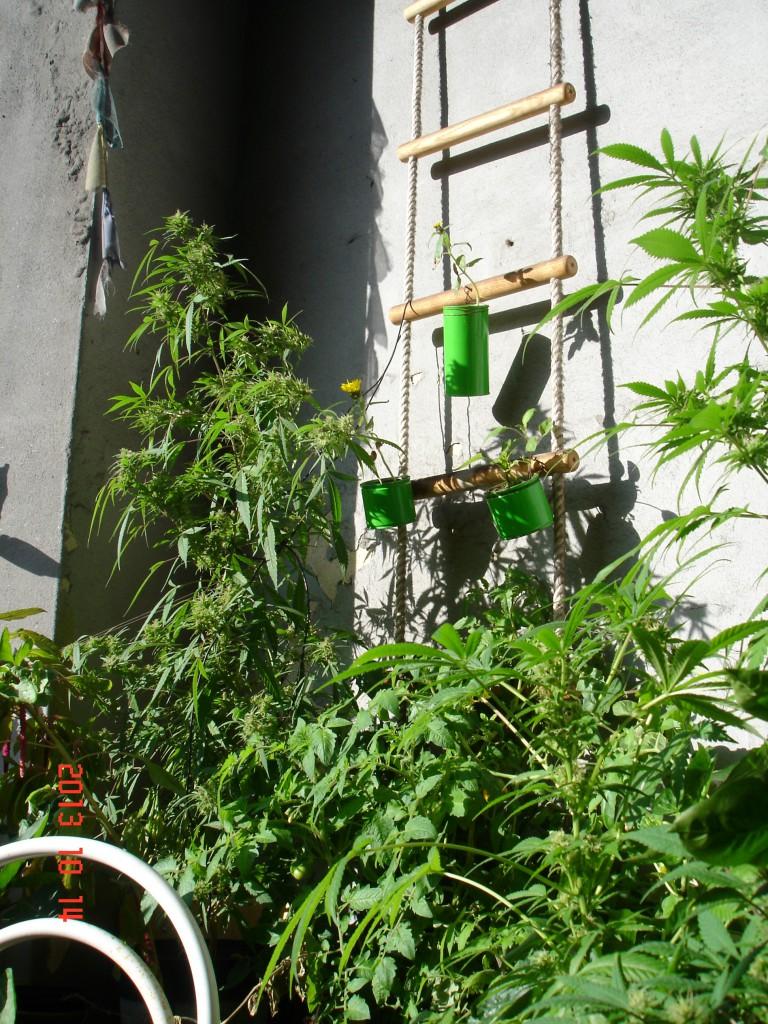ein sonniger Balkon mit lauter grünen Pflanzen drauf :-)