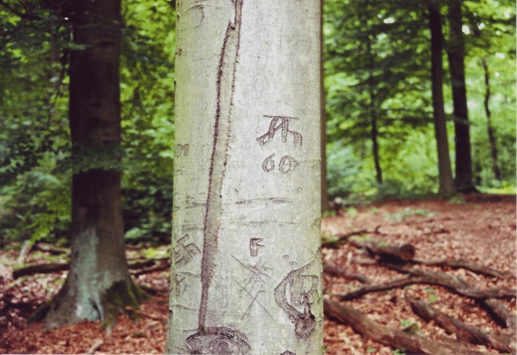 Ein Baumstamm (Buche), an dem alte Schnitzereien zu erkennen sind: Eine Signatur Ah und die Zahl 60 sowie ein Hakenkreuz