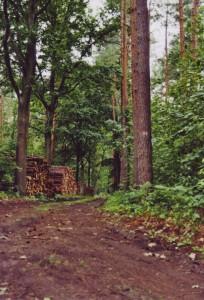 Aufgeschichteter Stapel von Baumstämmen im Grunewald
