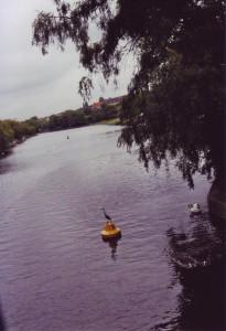 Ein schief aufgenommenes Bild eines Reihers, der auf einer Boje im Landwehrkanal sitzt