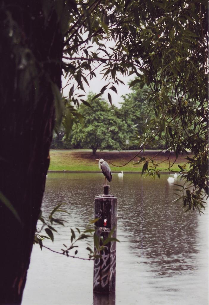 Ein Reiher sitzt im Regen auf einem Pfosten im Landwehrkanal