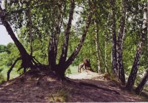 Ein Baumstumpf inmitten von Birken, der ein wenig nach einem wilden Tier aussieht