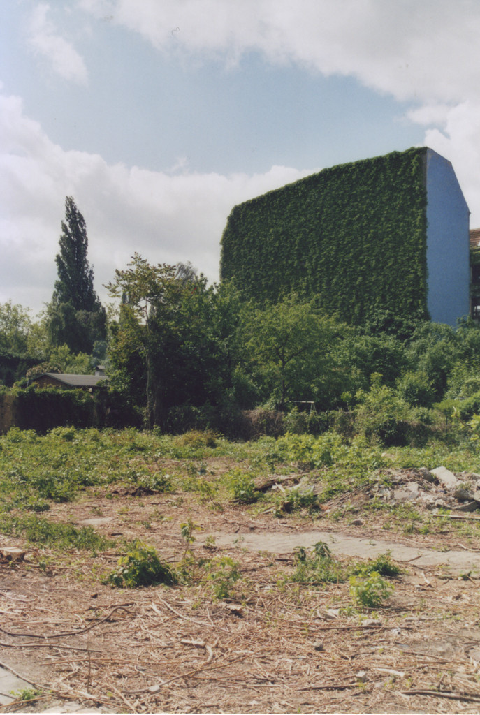 Rückseite eines Wohnhauses, komplett eingewachsen und grün, die schmale Seite des Hauses ist blau, davor eine Brachfläche