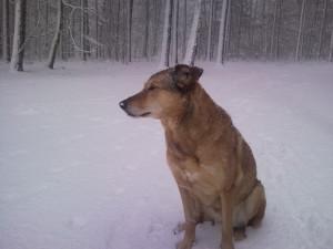 Der tollste Hund der Welt trotzt dem Schnee