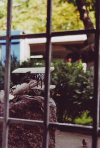 Modellflieger im Garten