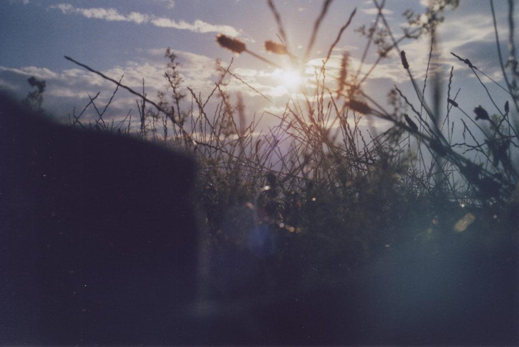 Die Sonne blinzelt durch das Gras an der Müritz